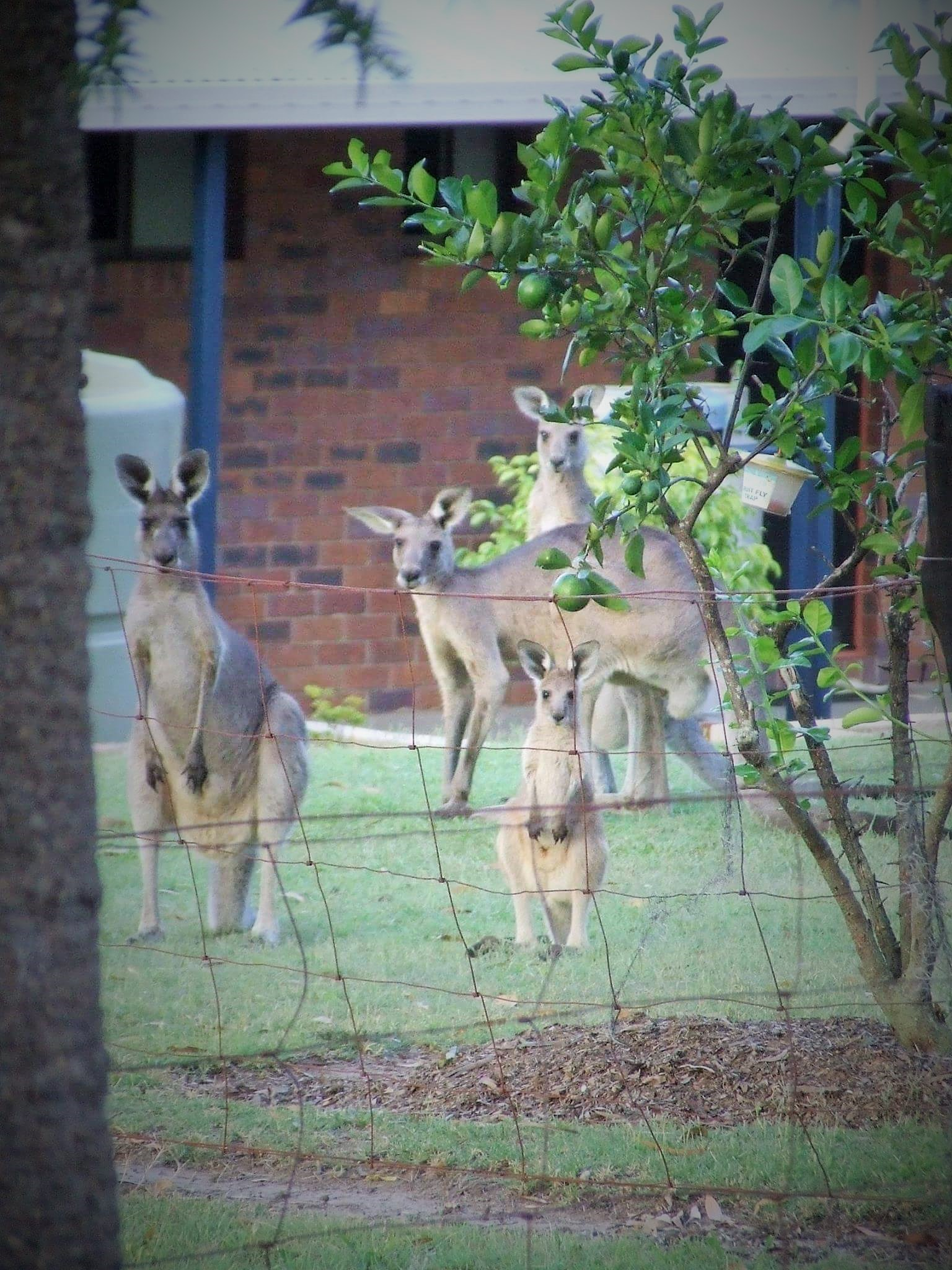 Photo Bombers in my Backyard by Dee Hudson