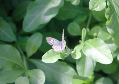 On The Wings Of The Butterfly by Lydia Ellingsen