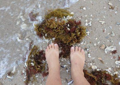 Leaving Footprints in the Sand by Rachel Kneubuhler