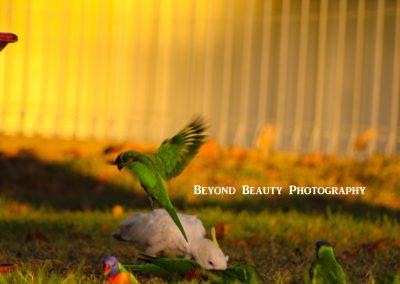 Birds by Katrina-Marie Amos