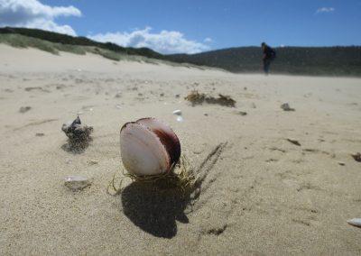 Beach Walking, BrunyIsland by Rosamund Woodburn