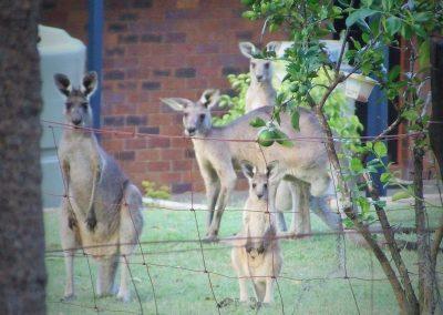 Photo Bombers in my Backyard by Dee Hudson
