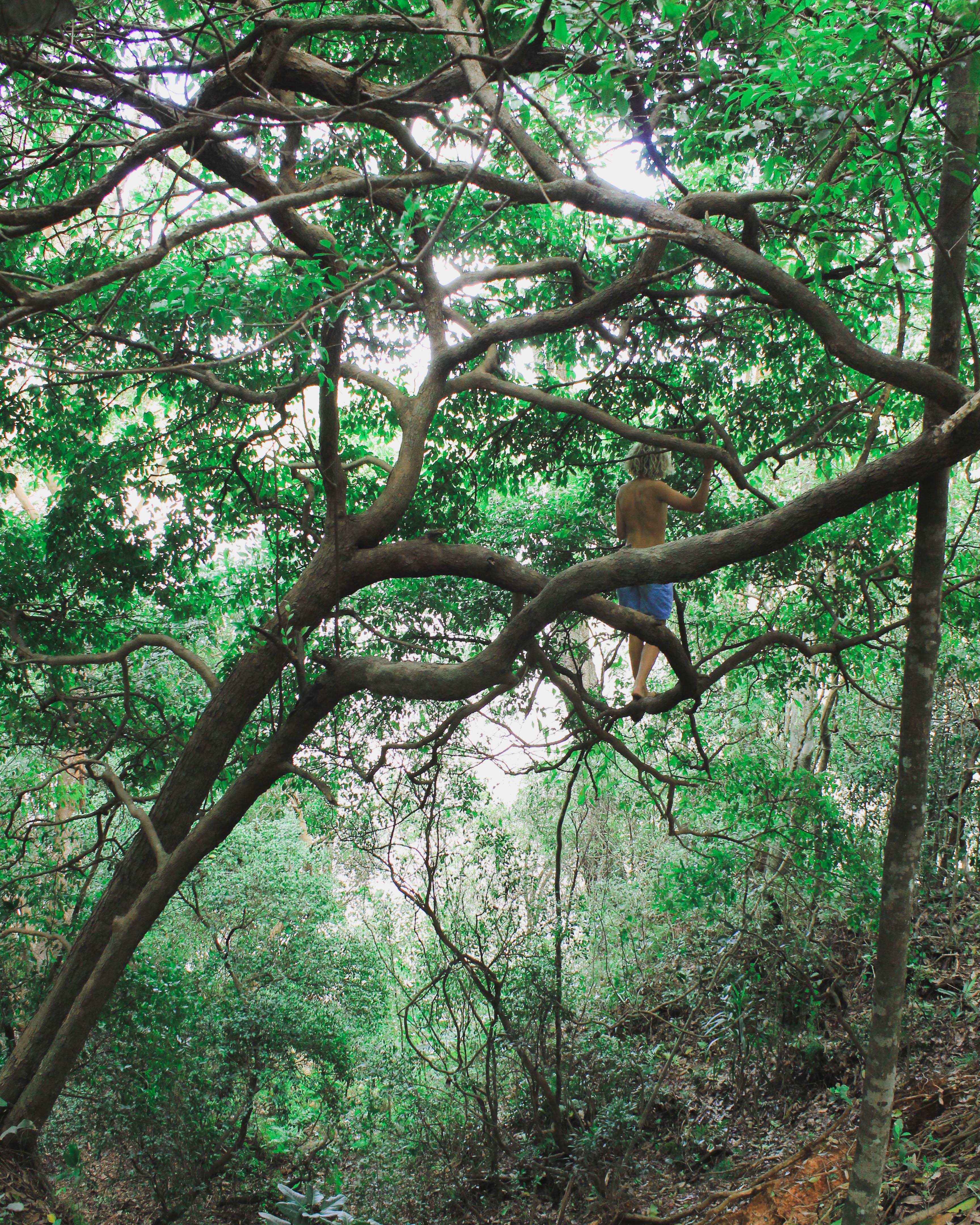 Treewalker by Joel Tudehope