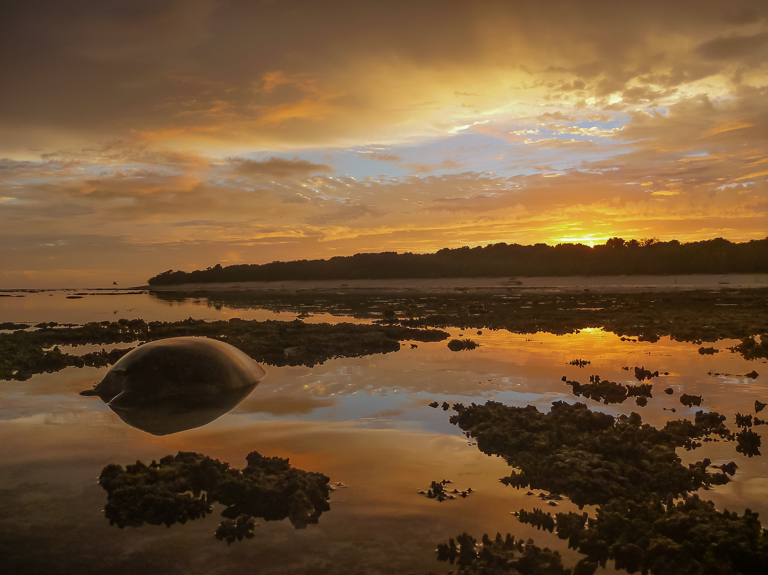 Turtle Awaits the Tide by John McGrath