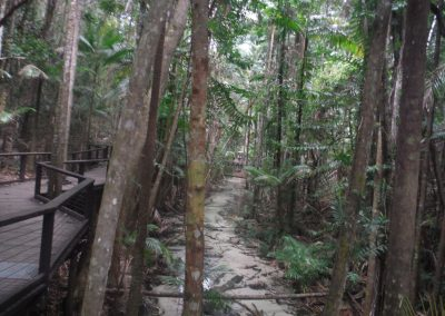 Tropical Creek by Makayla Battese