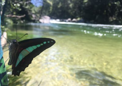 Blue Triangle at Mossman Gorge by Todd Samorowski