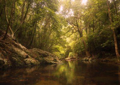 Forest Mirror by Philip Klitscher