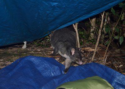 Night Visitor by Marita Hills