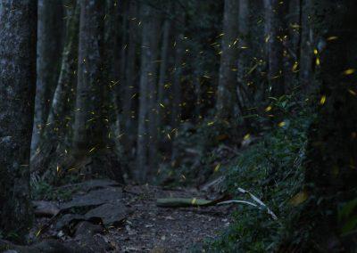 James_McGregor_Fireflies