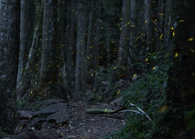 James_McGregor_Fireflies2