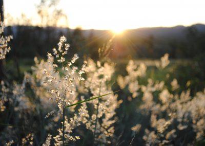 Joash_Crawford_Sun-beam-backlit-grass-seeds