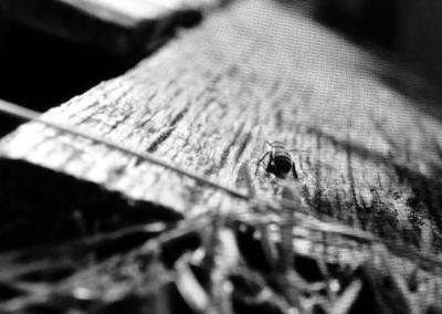 Thomas_Layton_Bees-Eye-View